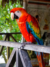 Latifabad Birds For Sale OLX Hyderabad Free Classifieds OLX Ads